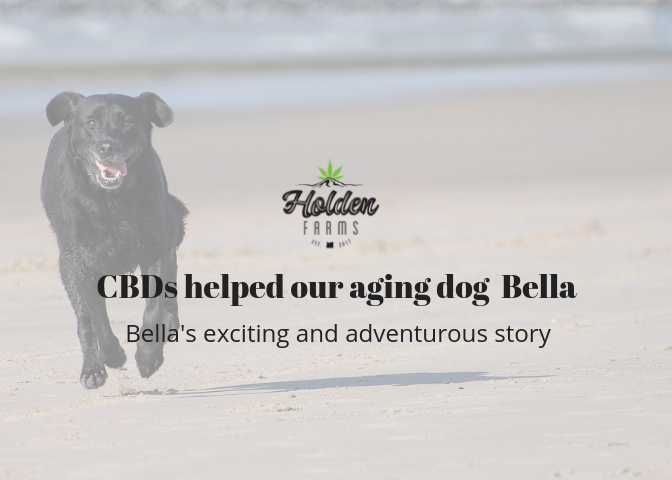 CBDs for dogs