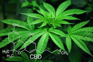 Cannabis cultivation Israel